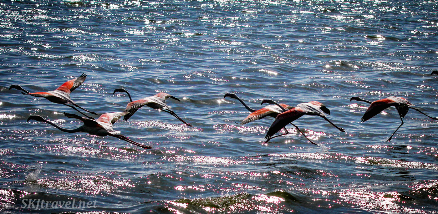 Flamingos in flight, Swapkopmund, Namibia.