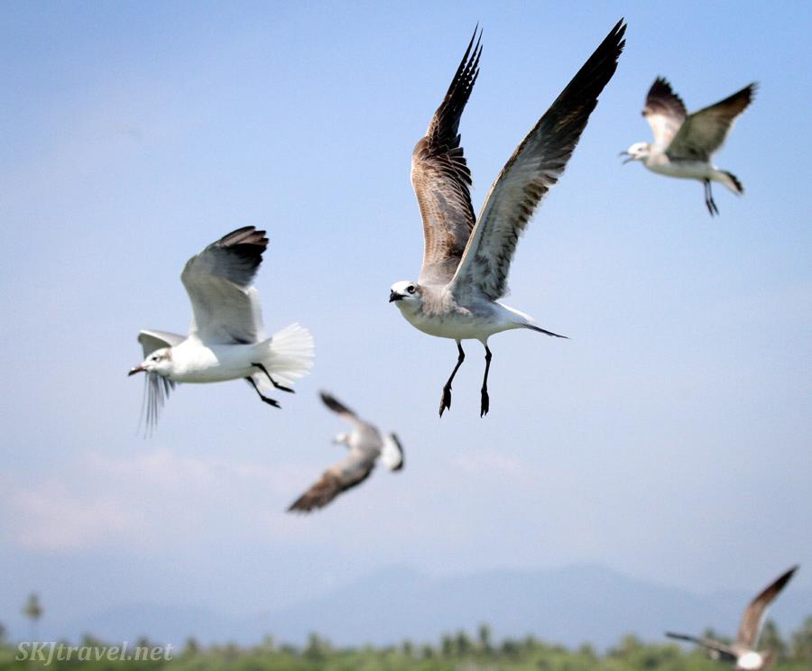 seagull reader essays ebook Seagull reader essays 2nd edition [ebooks download media] [pdf] seagull reader essays 2nd editionpdf you can download and read online pdf file book.