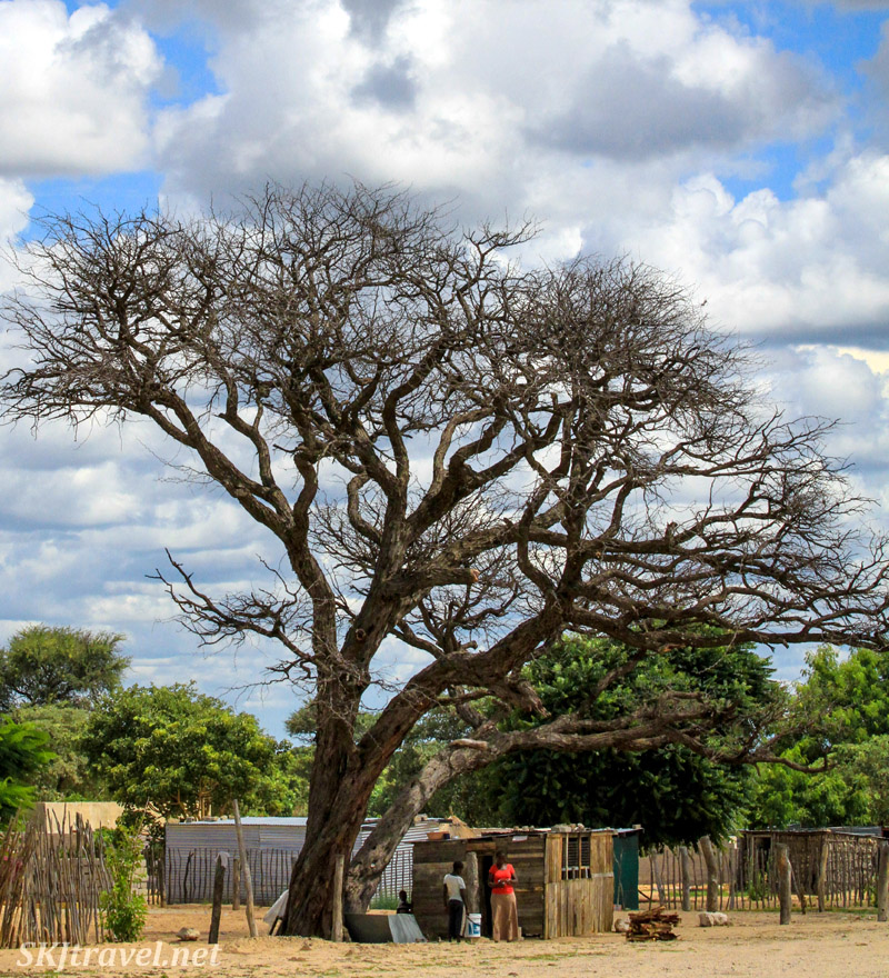 Roadside shop beneath a huge tree, northern Namibia.