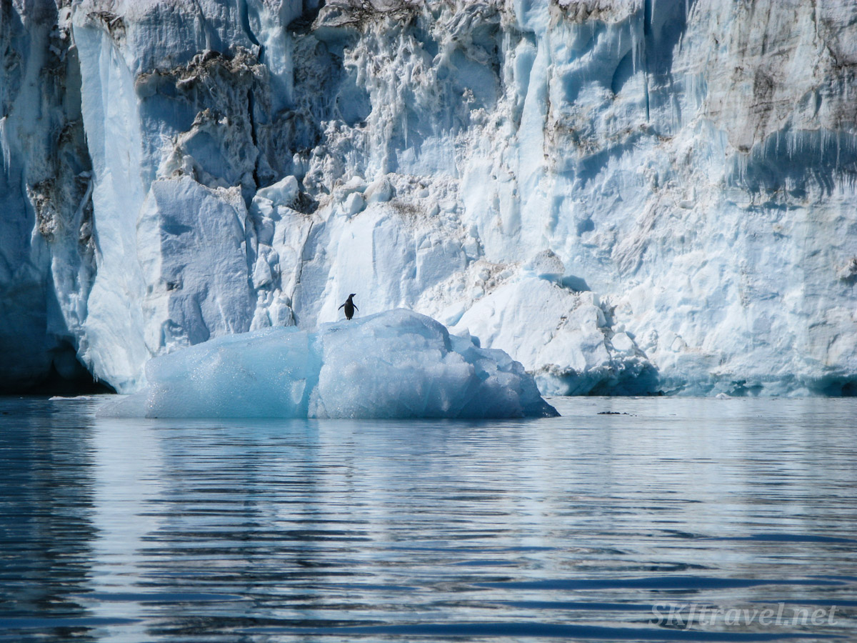 Penguin on an iceberg in front of a glacier at Brown Bluff, Antarctic Sound.