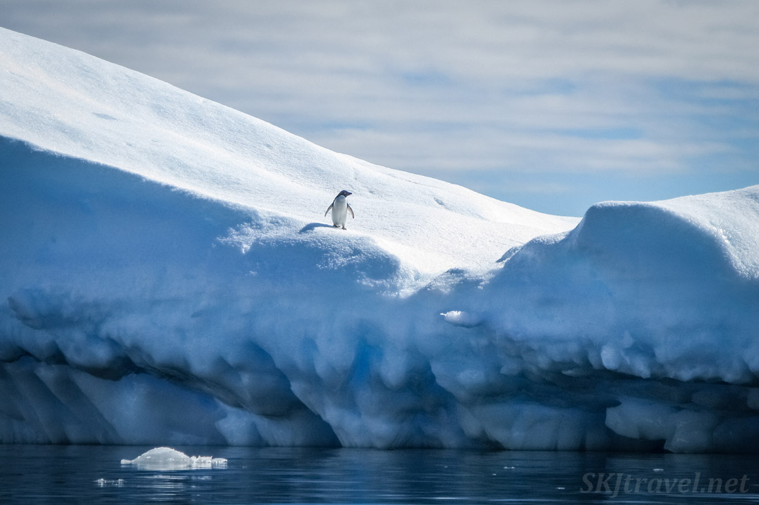 Penguin alone on an iceberg at Brown Bluff, Antarctic Sound.