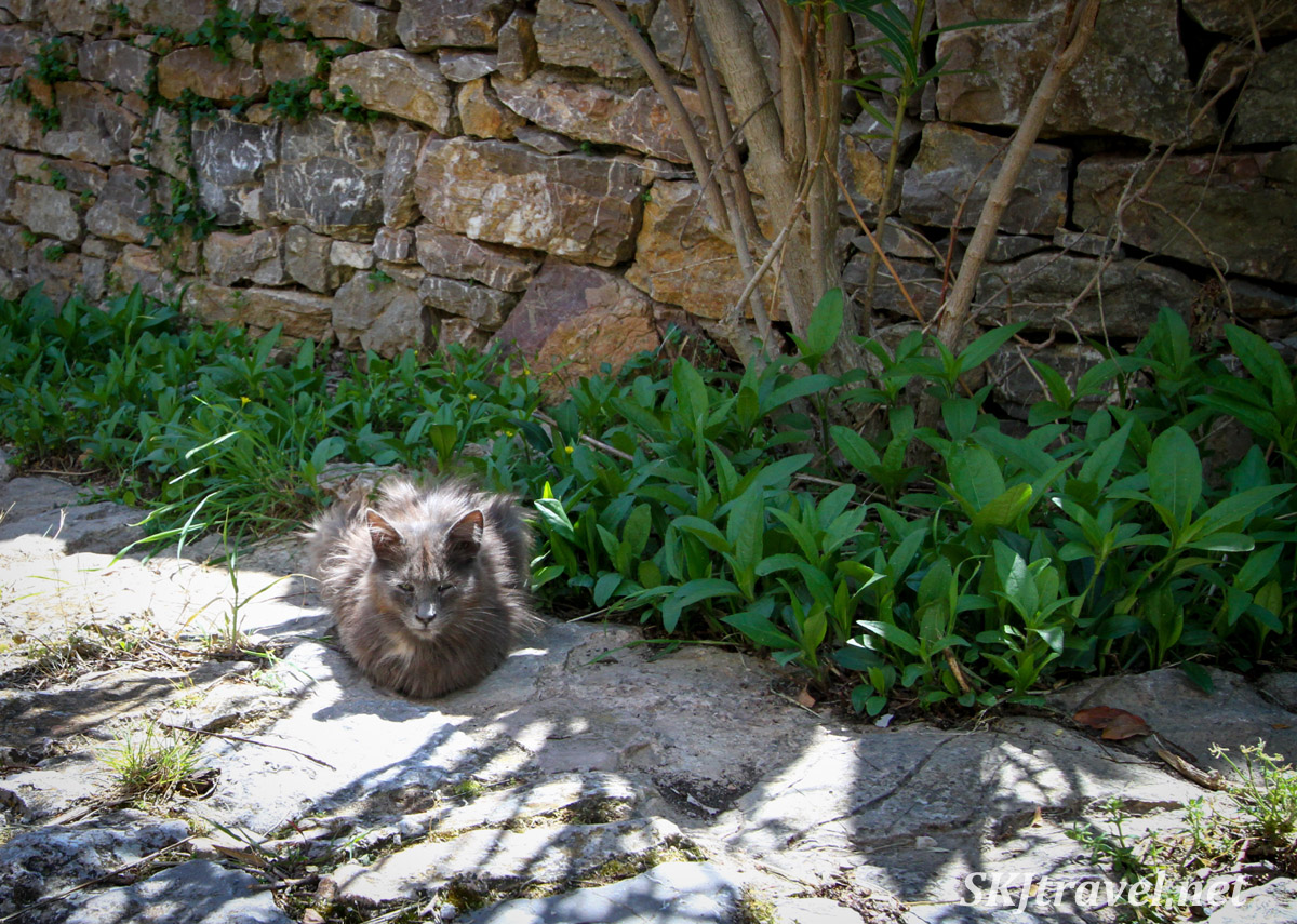 Kitty cat on a stone pathway in Anavatos, Chios Island, Greece.