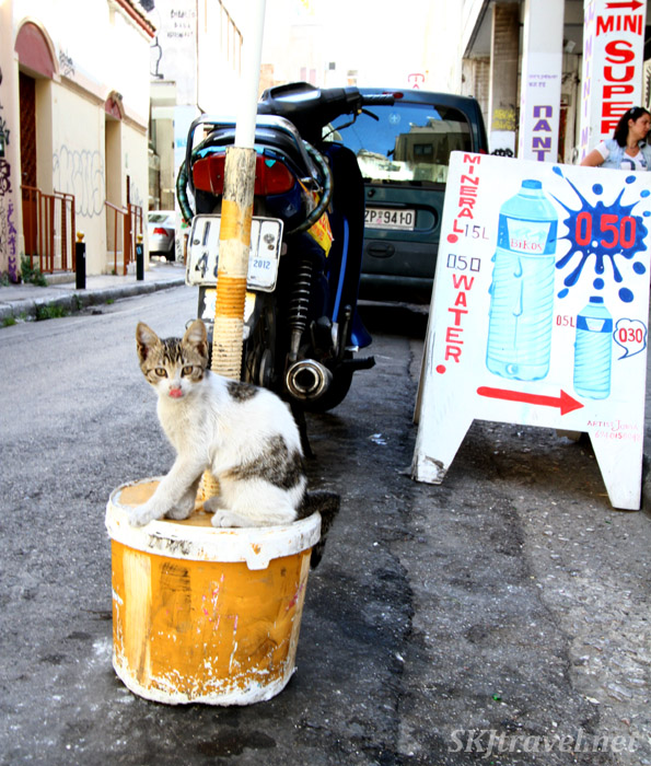 Cat on a street corner in Athens, Greece.