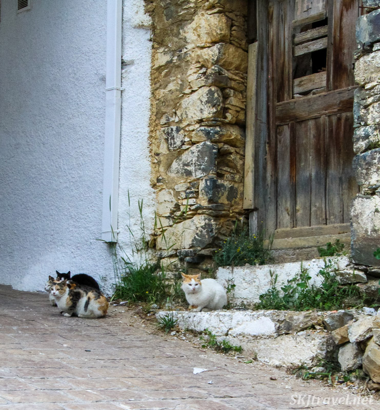 Cats sitting in front of an abandoned building with wooden door and stone frame. Chios Island, Greece.