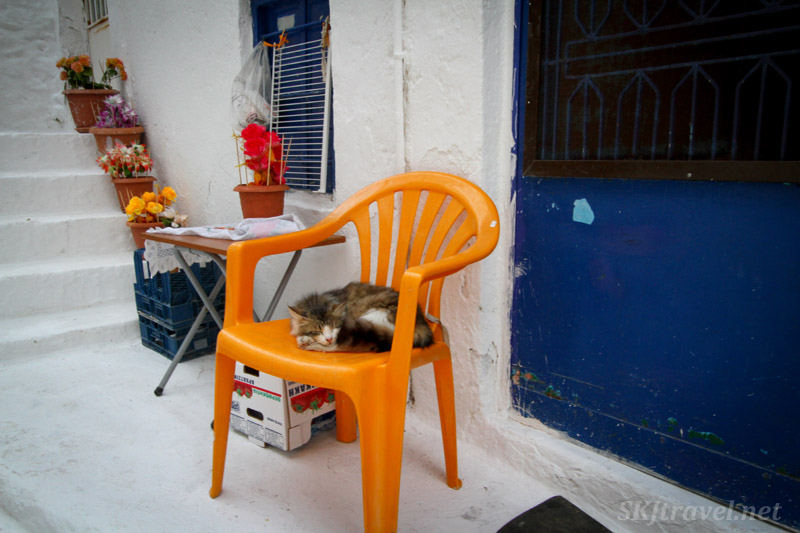 Cat napping in a chair in the village center of Pyrgi village, Chios Island, Greece.