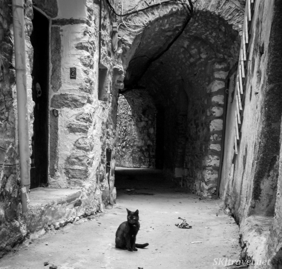 Black kitty cat in the middle of an alley in the medieval mastic village of Mesta, Chios Island, Greece. black and white photography