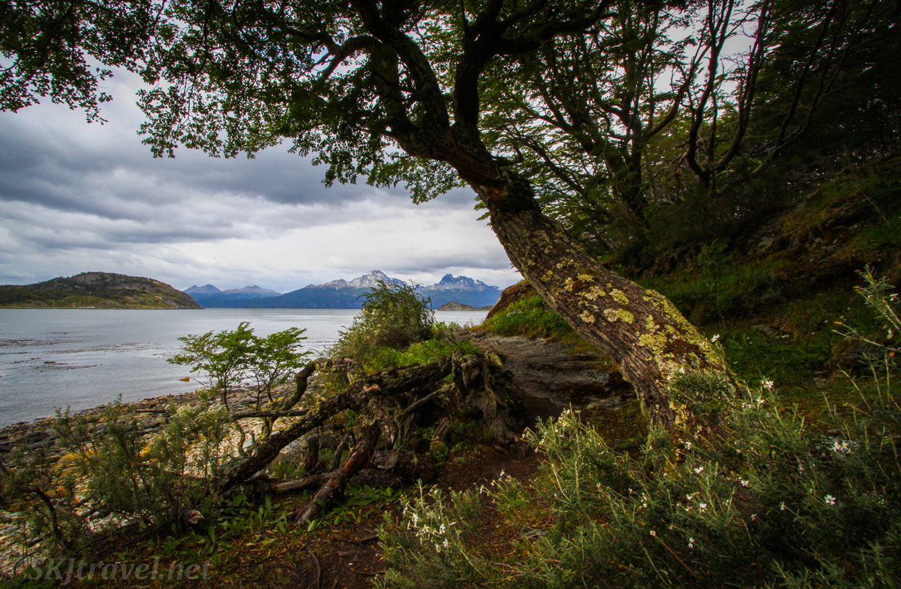 Path along the shoreline, Tierra del Fuego National Park, Argentina.