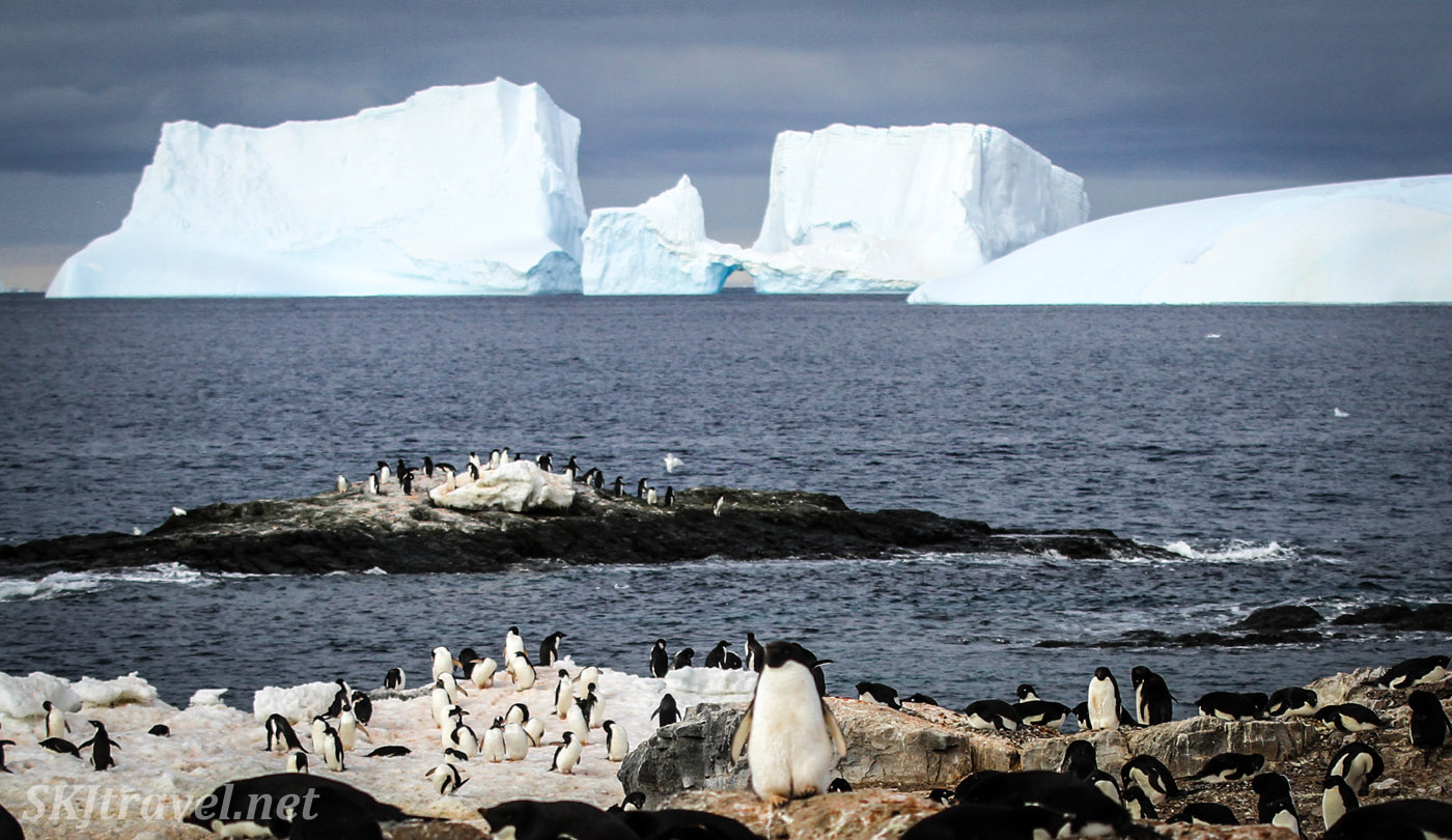 Penguin colony with enormous icebergs at sea, Gourdin Island, Antarctica.