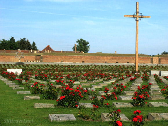 rows of graves and red roses and Jewish star