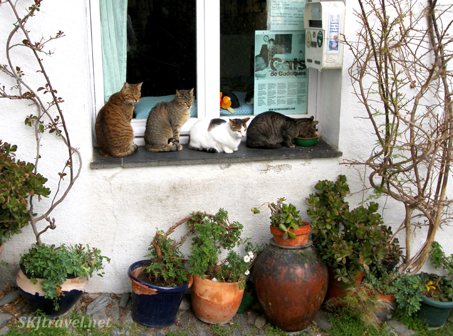 Cats patiently lining up for food at the cat care society house in Cadaques, Spain.