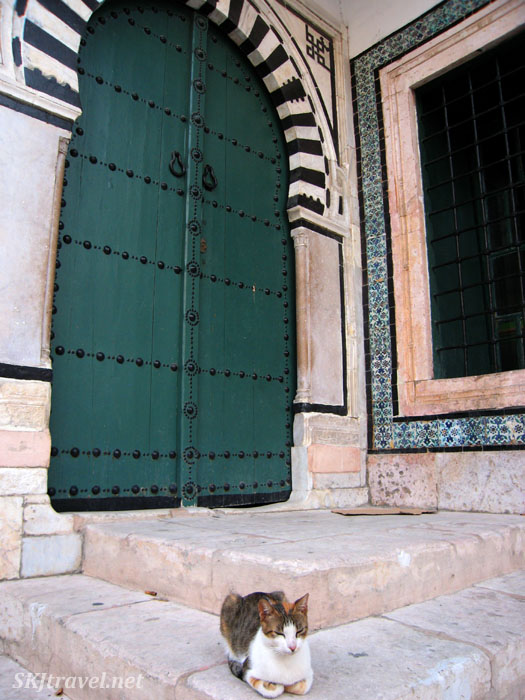 Kitty sitting on a step in front of a door in the medina in Tunis, Tunisia.