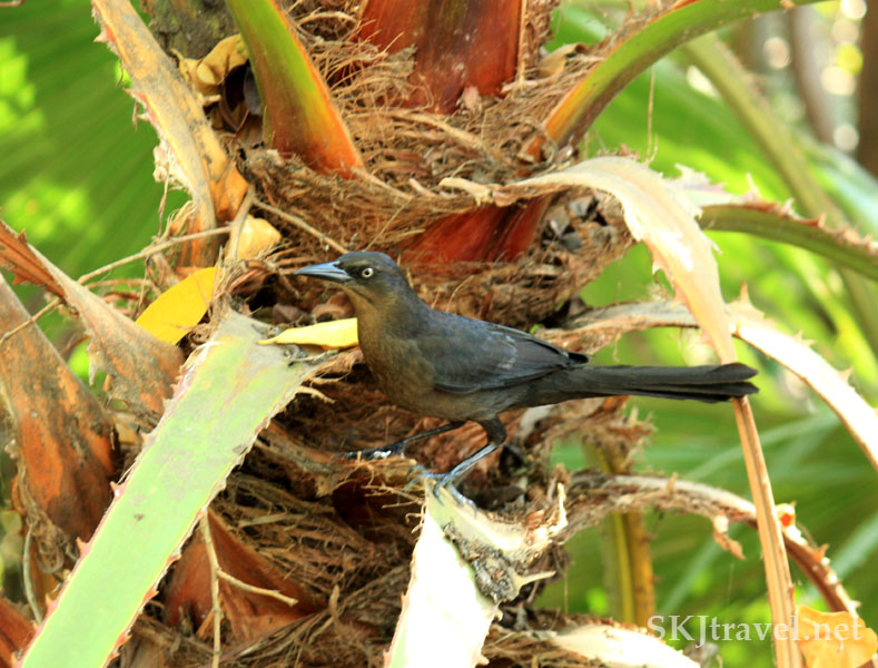 A small black bird stands in his nest in a tree. Photo by Shara Johnson
