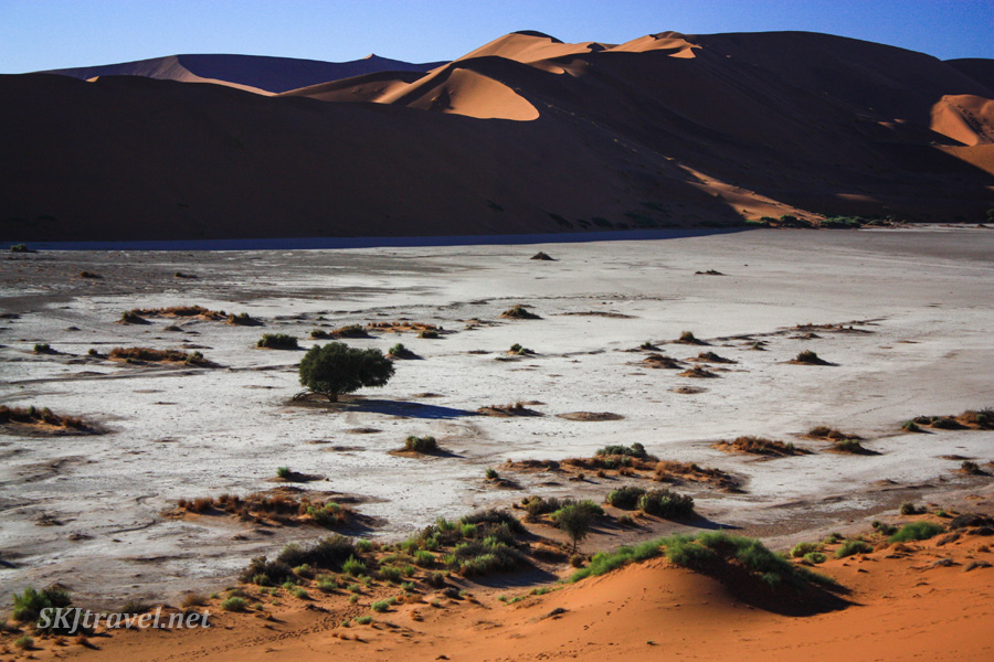 Landscape in the dead vlei of Sossusvlei NP, Namibia. Like a lunar or alien landscape.
