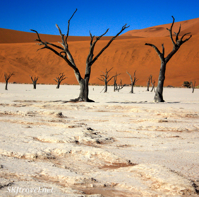 Trees dead and desiccated for centuries in the dead vlei, Sossusvlei NP, Namibia.