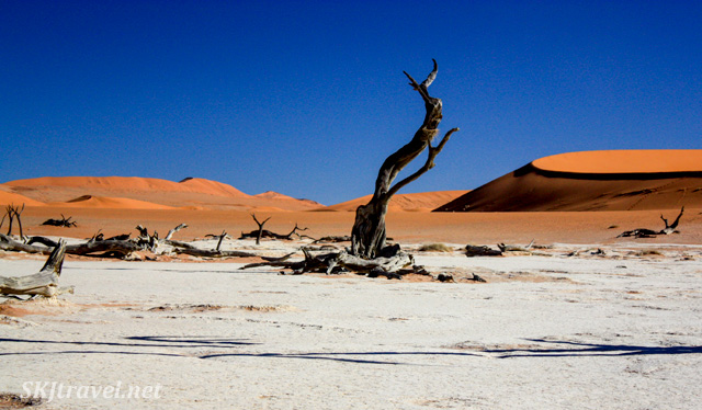 Dead trees among the red sand dunes and blue sky in the dead vlei, Sossusvlei NP, Namibia.