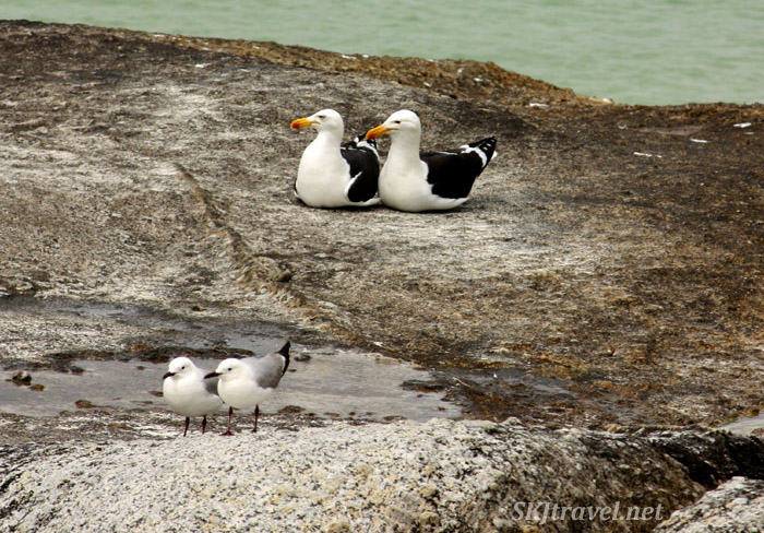 two pairs of different species of birds sitting on a rock