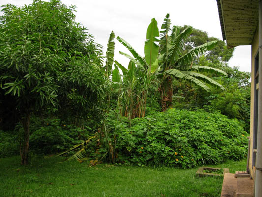 Backyard at my flat at UWEC, Entebbe, Uganda.
