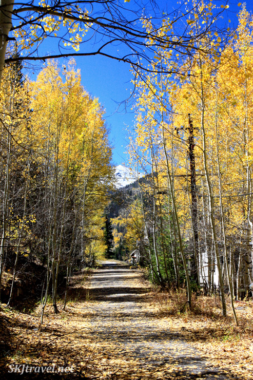 Aspen-lined road through the ghost town of Gilman, Colorado.