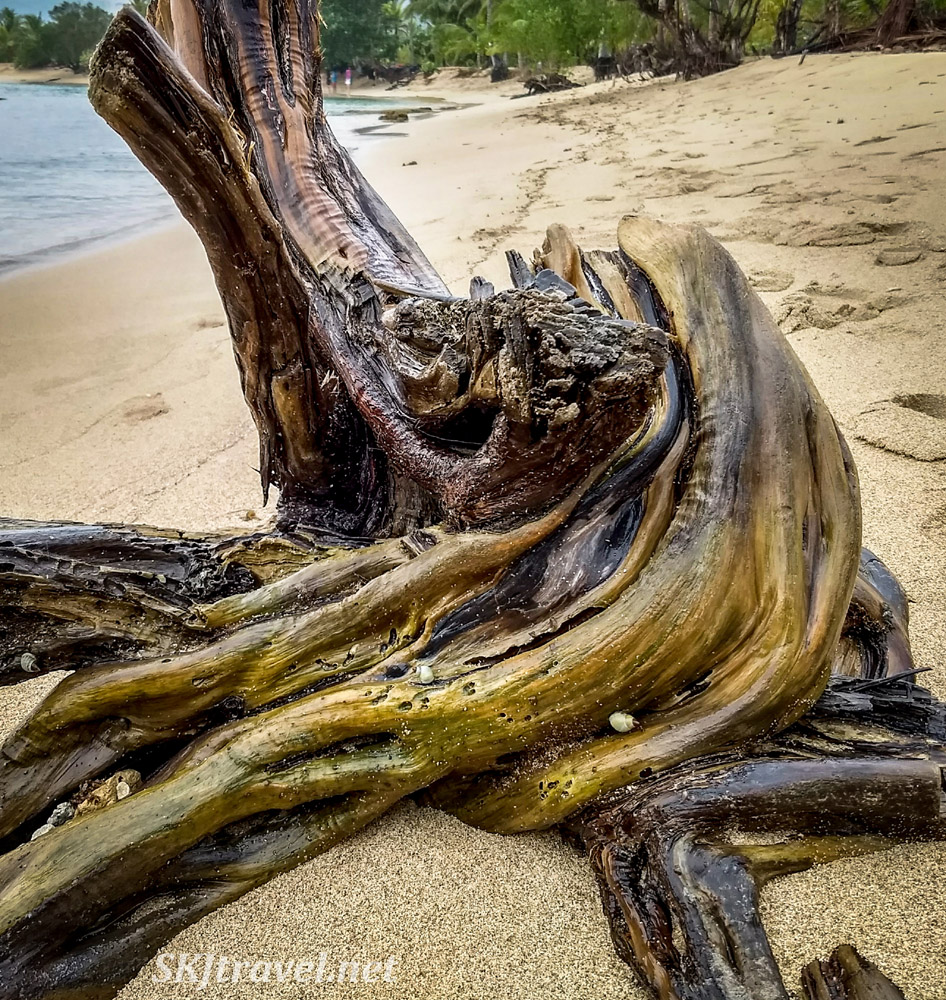 Beautiful driftwood on a beach near Armila, Guna Yala, Panama.