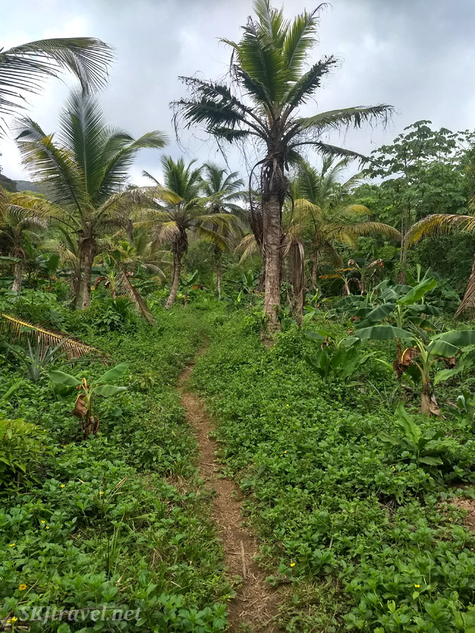 Path leading from the village into the jungle. Armila, Guna Yala, Panama.
