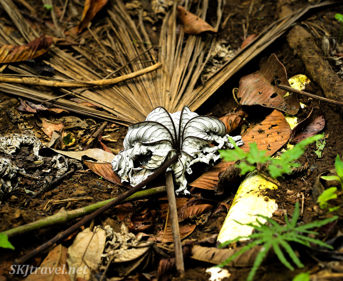 Dead leaves on the floor of the jungle. Armila, Guna Yala, Panama.
