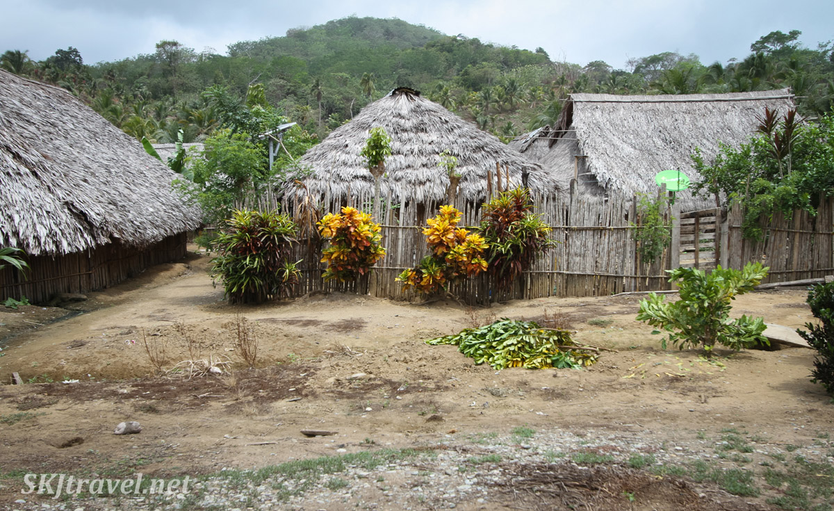 Bamboo hut with thatched roof, Anachakuna, Guna Yala, Panama. With yellow bushes outside courtyard fence.