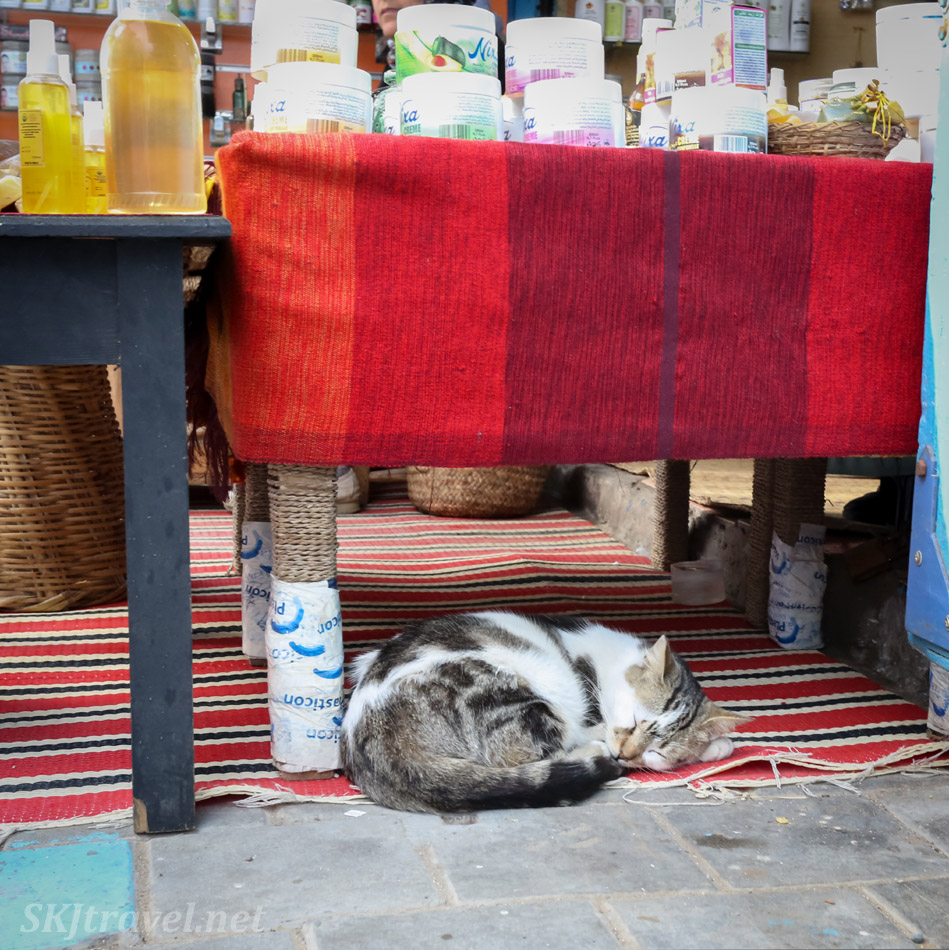 Cat napping in the medina, Essaouira, Morocco.