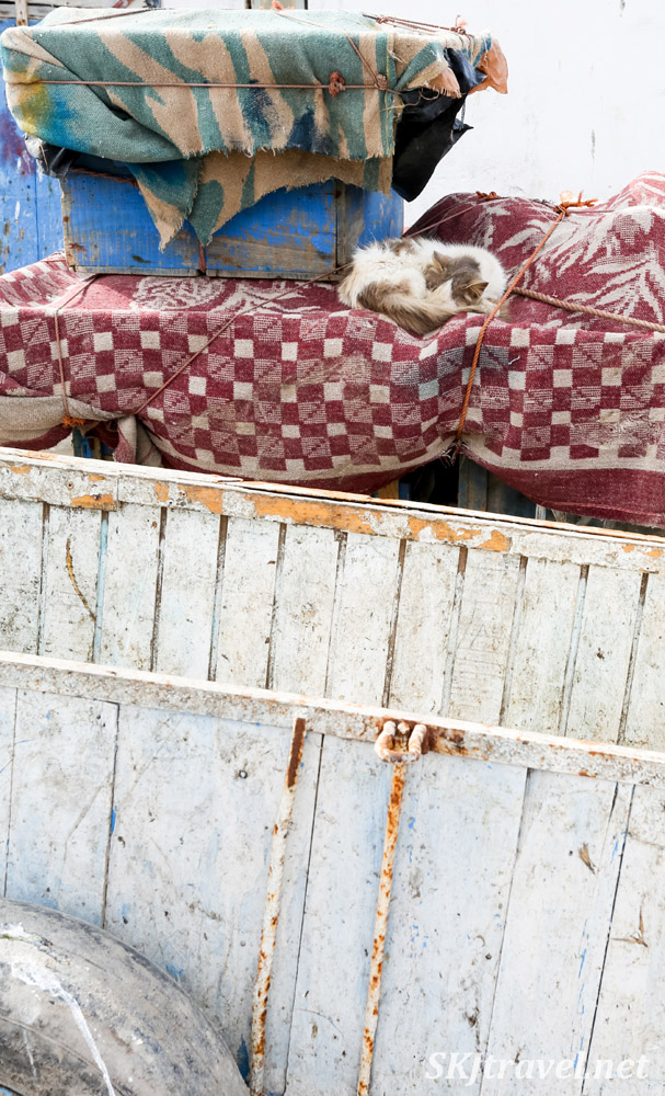 Cat napping on cloth covered bins, Essaouira, Morocco.