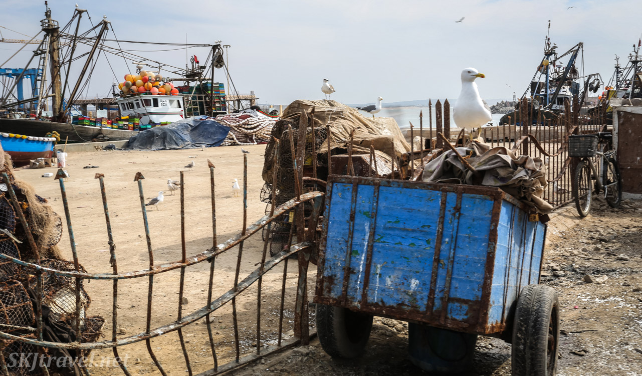 Blue cart with a seagull on top by a fence at Essaouira, Morocco.