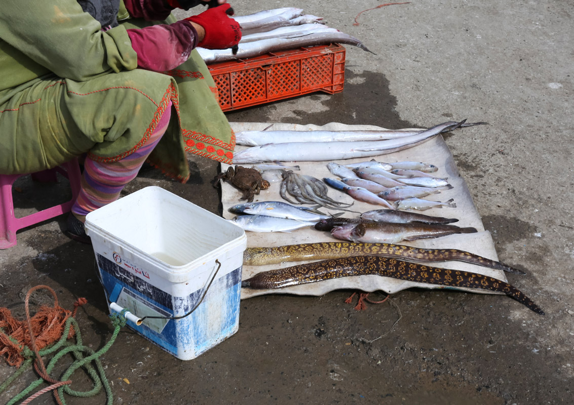 Selling fresh fish at the pier, Essaouira, Morroco.