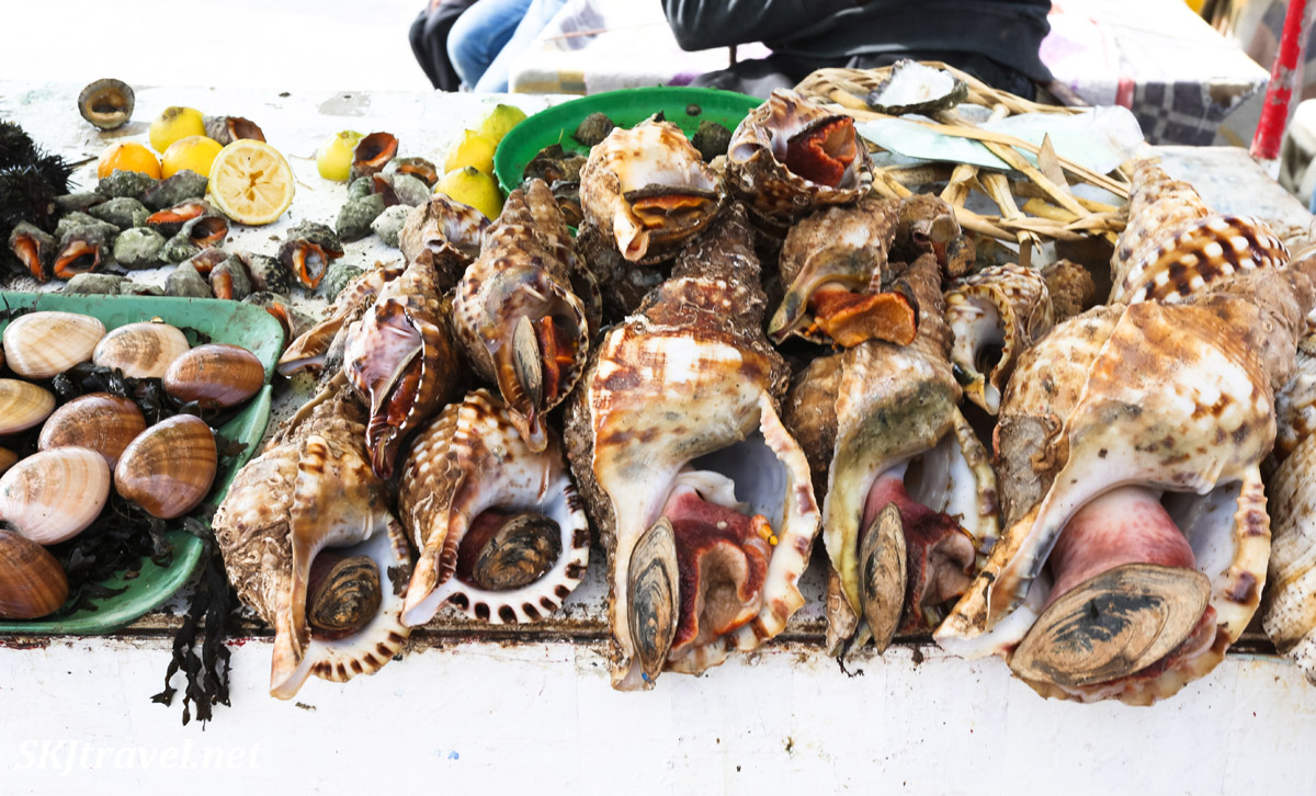 Selling fresh conch shells at the pier, Essaouira, Morroco.