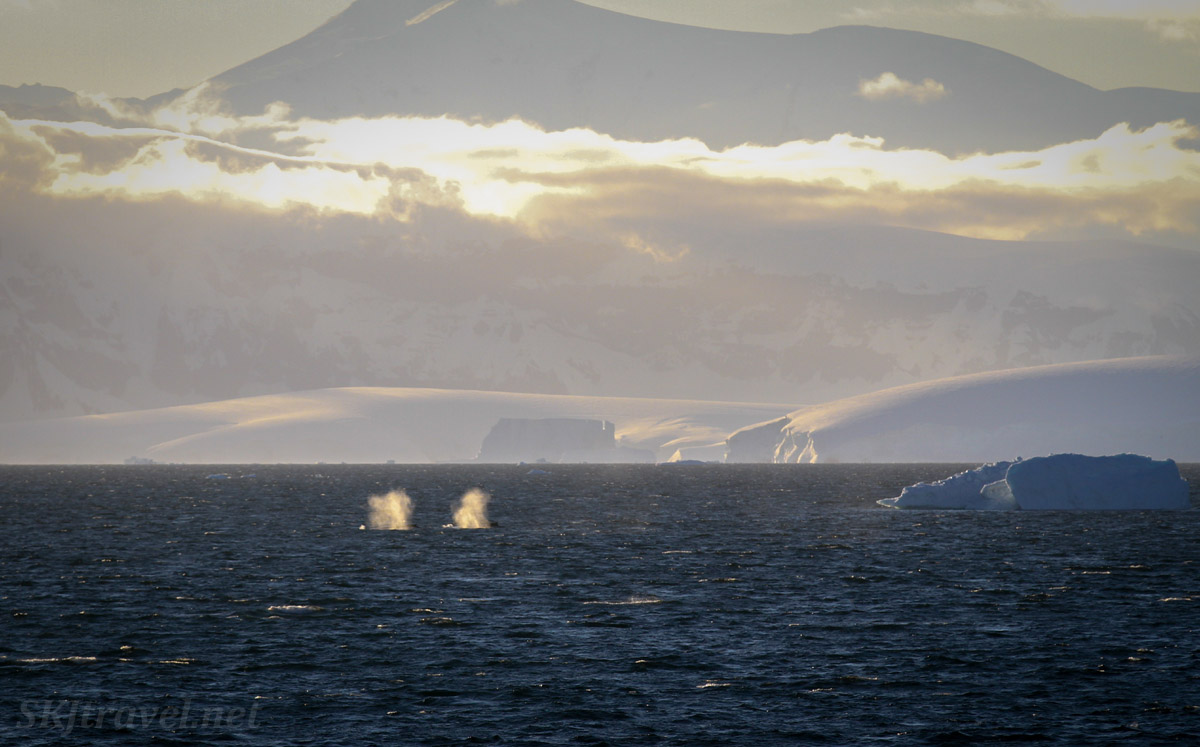 Pair of whales preceding the Sea Spirit. Antarctica.