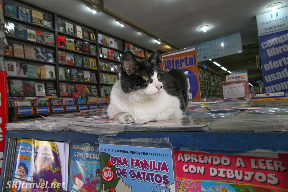 Cat in a bookshop sitting on top of a book about cats. Buenos Aires, Argentina.