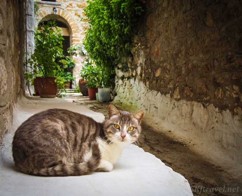 Kitty cat in Mesta village, Chios Island, Greece.