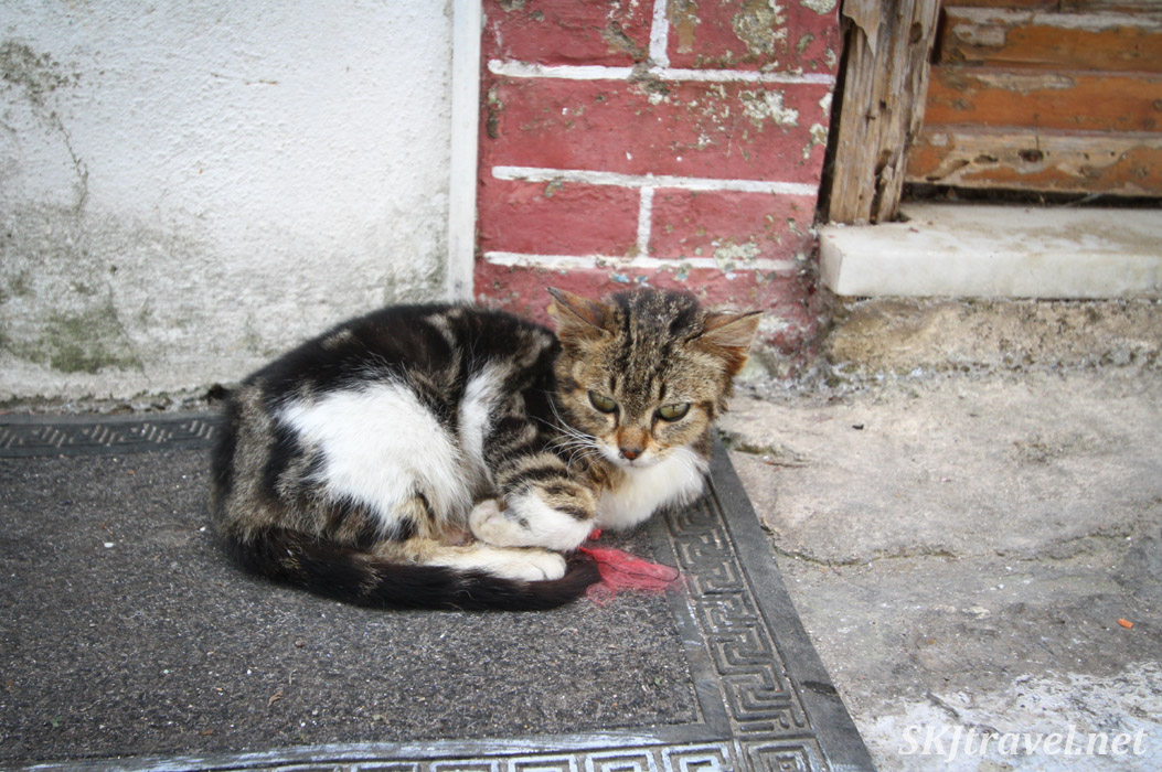 Cat napping on a sidewalk in Pyrgi village, Chios Island, Greece.