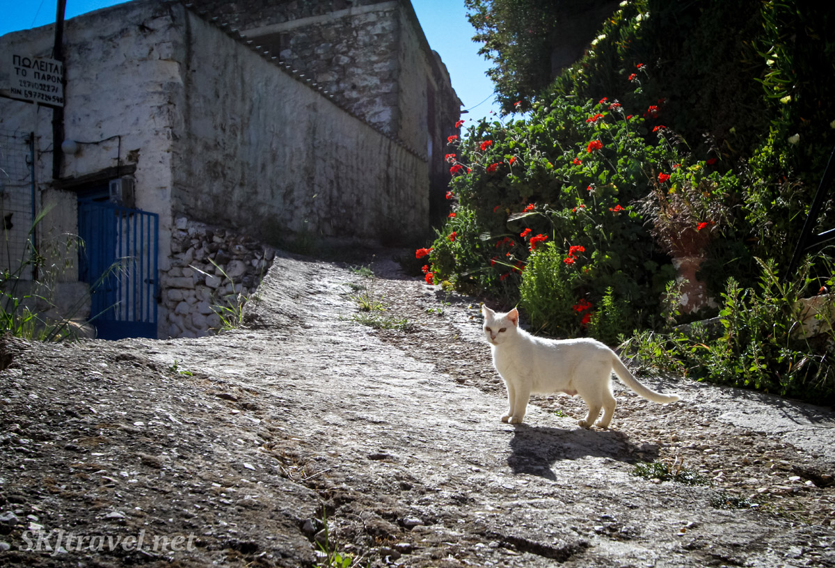 Cat on the cobblestone streets of Volissos, Chios Island, Greece.