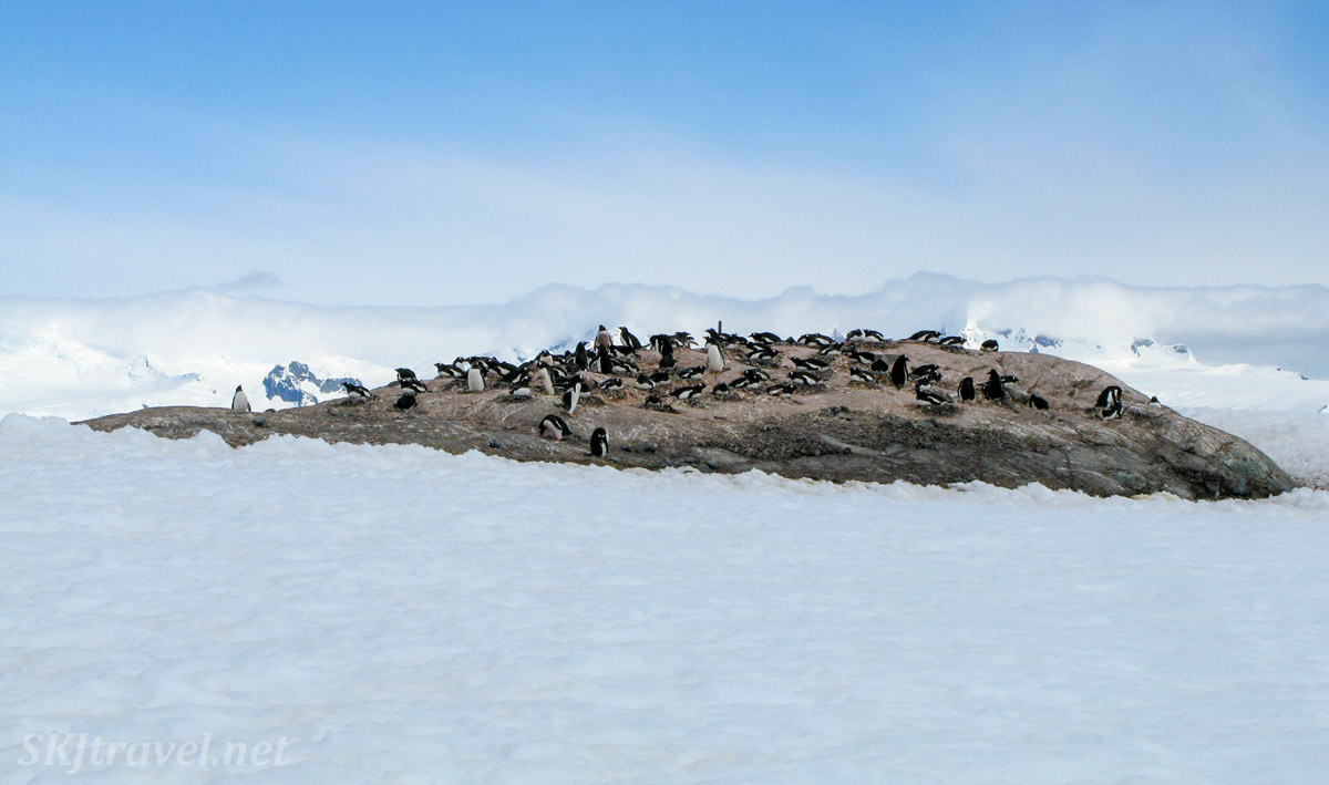 Penguins on a rock island, Mikkelsen Harbour, Antarctica.