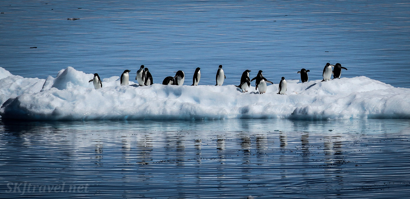 Penguins on a floating chunk of ice in the Southern Ocean, Antarctica.