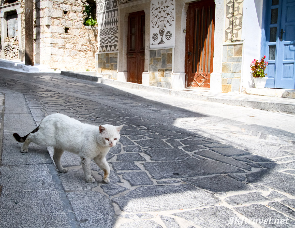 Kitty cat wandering the cobblestone streets of the medieval mastic village of Pyrgi, Chios Island, Greece.