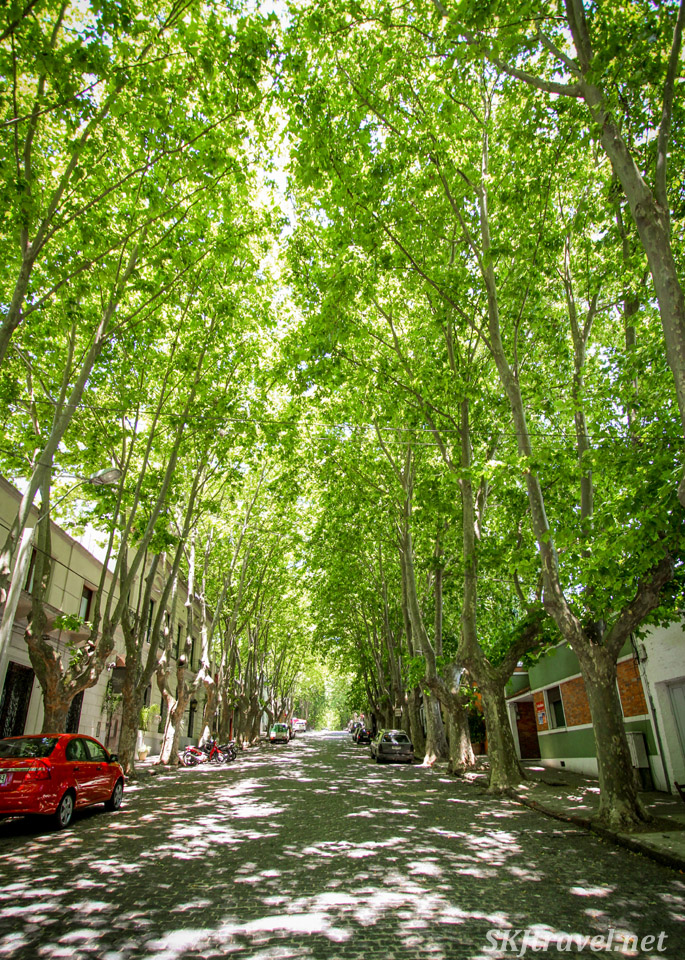 Tree-lined cobblestone streets of Colonia del Sacramento, Uruguay. Tree tunnel.