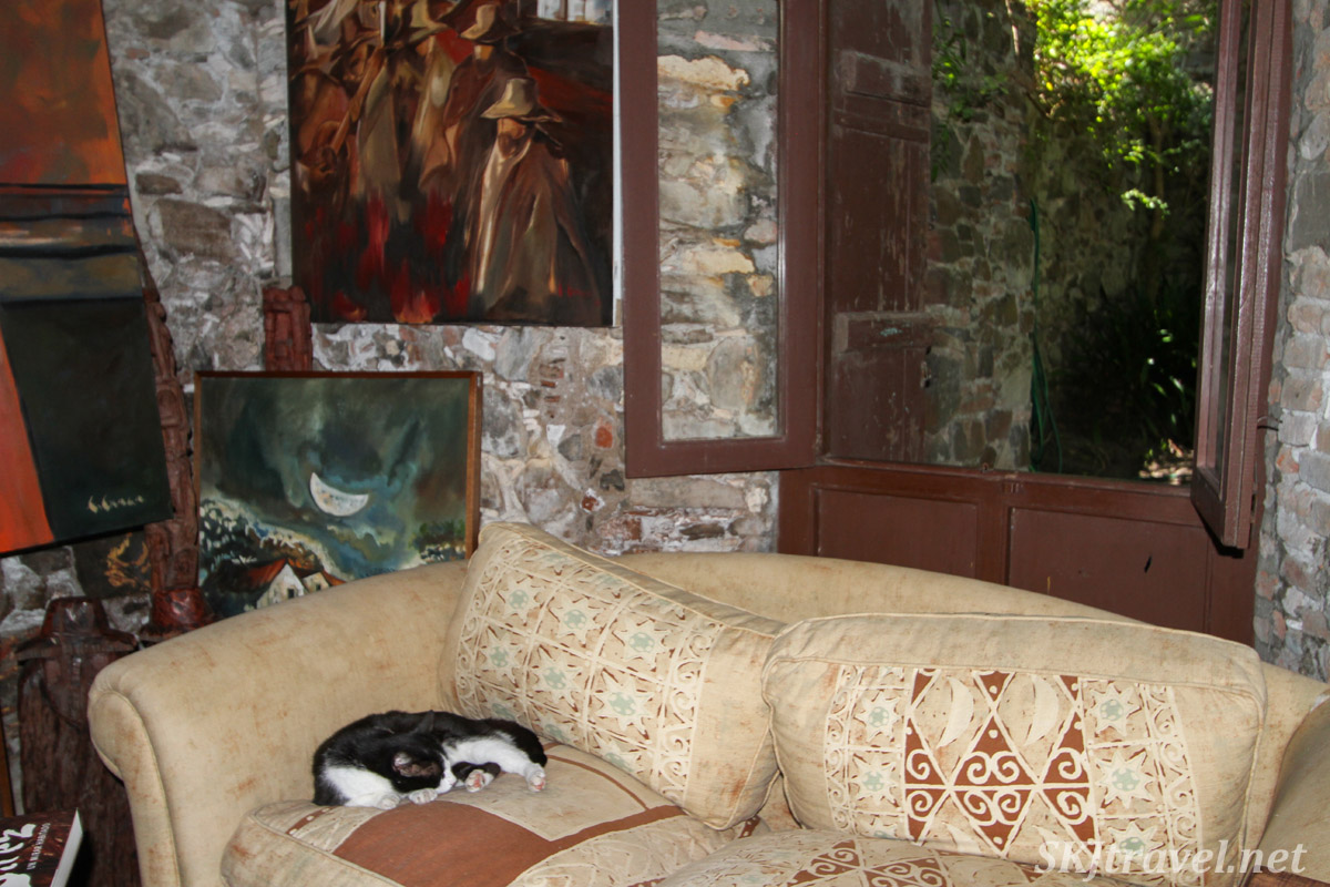 Kitty resting on the couch of a house art gallery, Colonia del Sacramento, Uruguay.