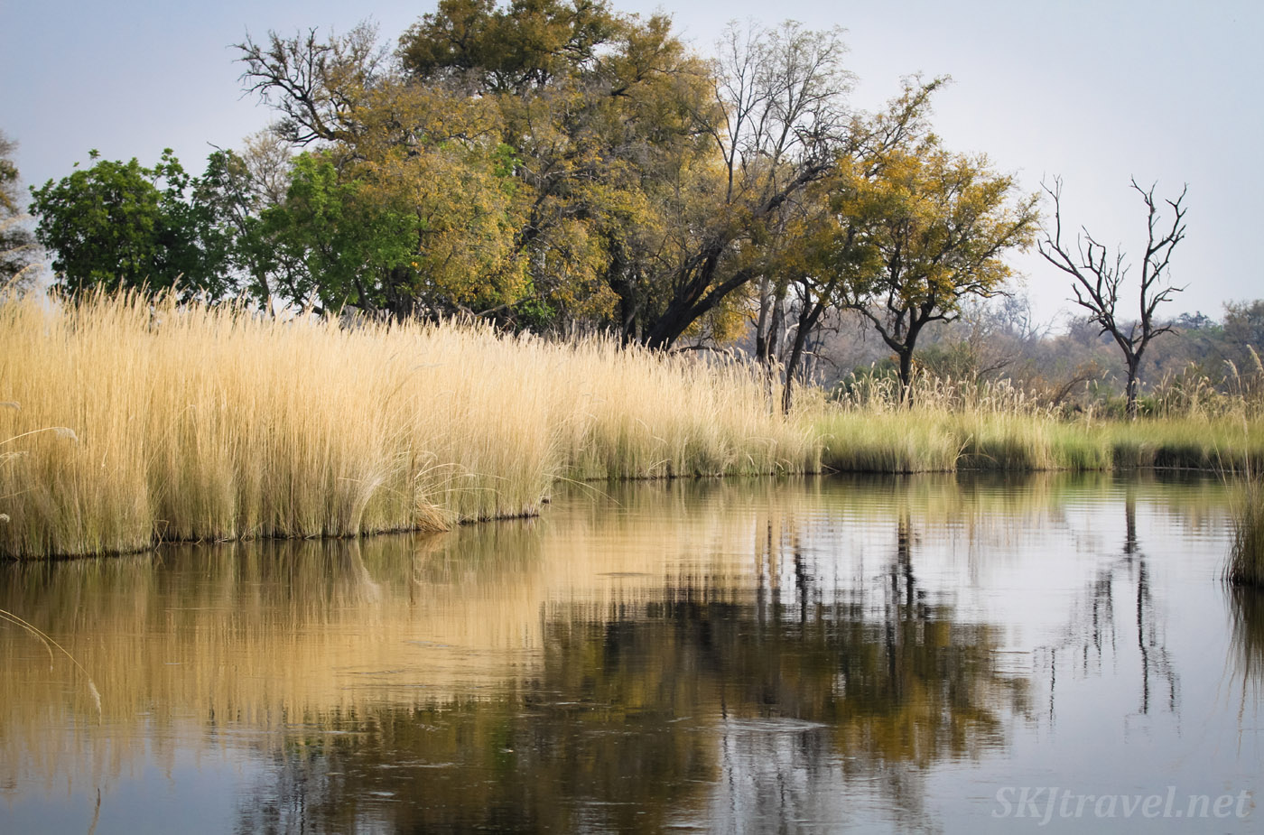 Marshland water channels, grasses reflecting on the water, in the Okavango Delta, Moremi Game Reserve, Botswana.