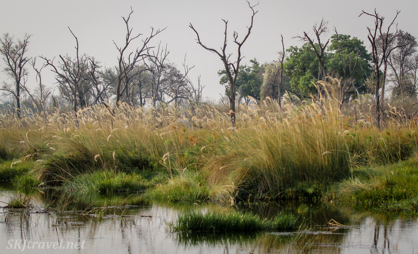 Marshland water channels, marsh grasses reflected on the water, in the Okavango Delta, Moremi Game Reserve, Botswana.