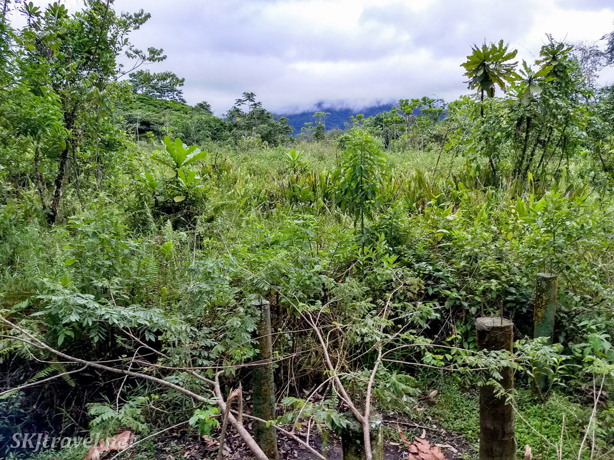 The growth that quickly takes over pasture land when left alone. La Fortuna, Costa Rica.