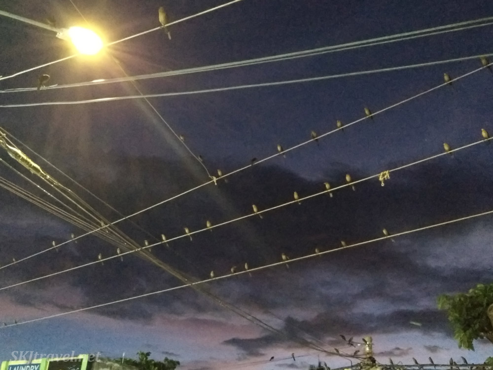 Birds sitting on the electrical wires over the streets of Tamarindo, Costa Rica.