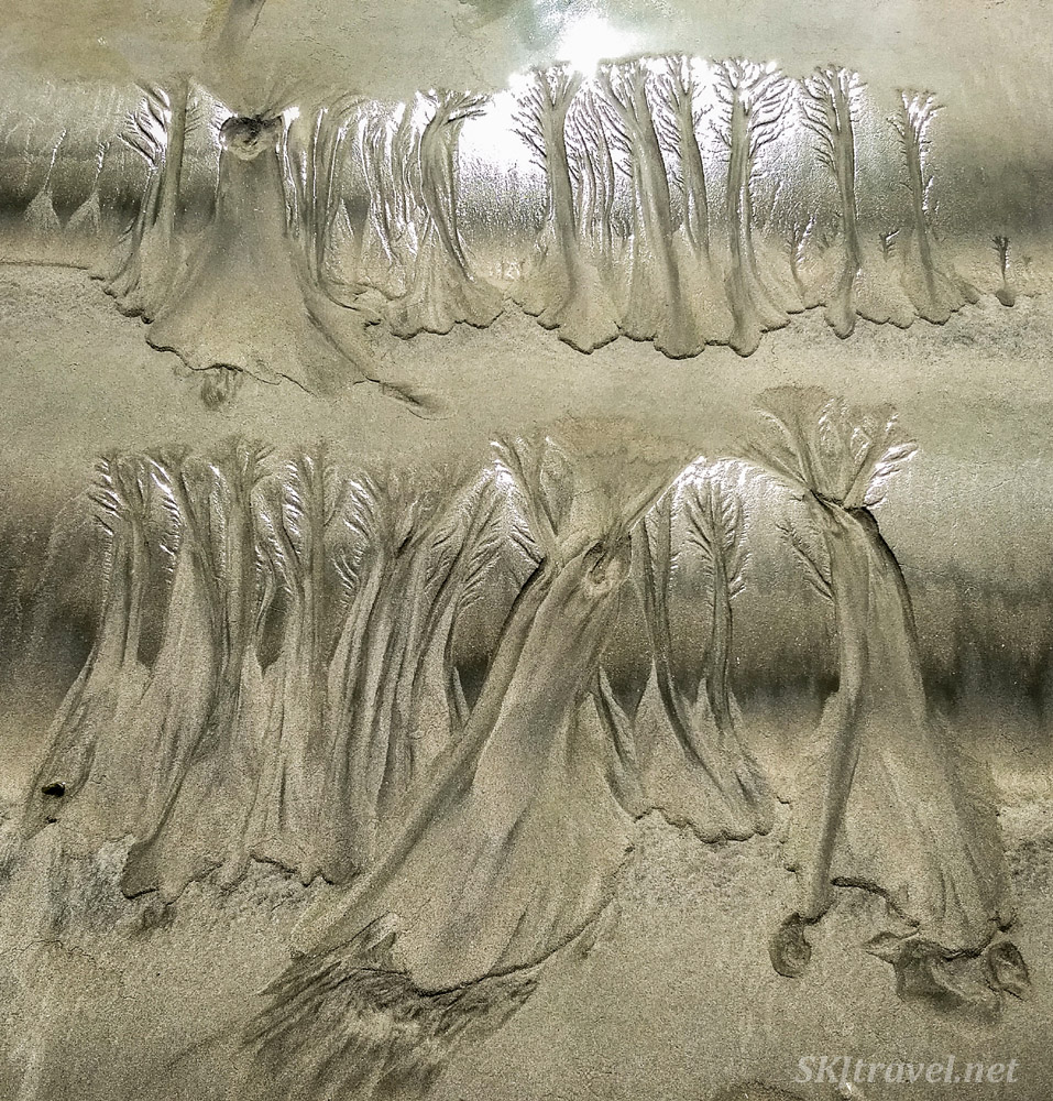 Erosion patterns left in the sand with the receding tide on Tamarindo Beach, Costa Rica. Looks like trees in a forest.