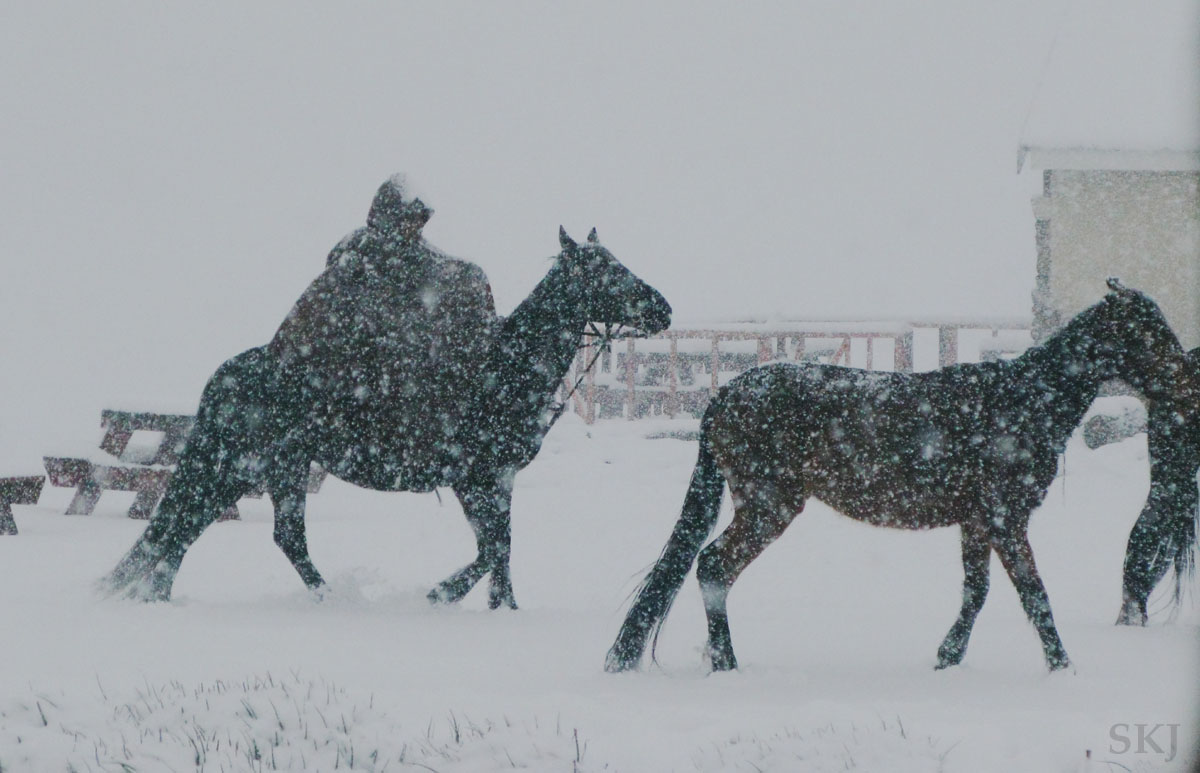 Horses and their rider walking through a snowstorm at the top of Sani Pass, Lesotho.