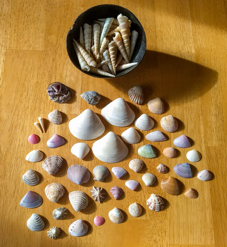 Colorful variety of seashells collected at Tamarindo Beach, Costa Rica.