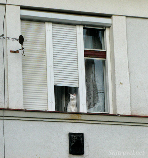 White kitty cat watching the world from a white window. Poprad, Slovakia.