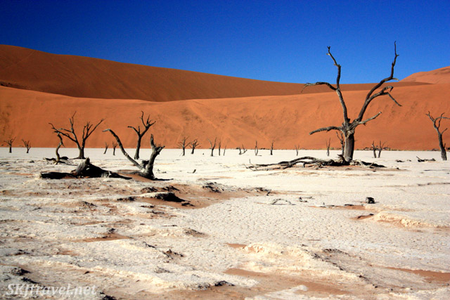 Dead vlei in Sossusvlei, Namibia. Blue sky, red sand dunes and white clay pan whole centuries-old dead trees.